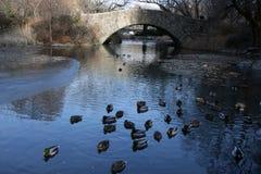 Lagoa em New York Imagem de Stock