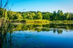 Lagoa em um dia ensolarado Fotografia de Stock Royalty Free