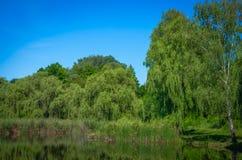 Lagoa em um dia ensolarado Imagem de Stock Royalty Free