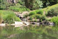 Lagoa em um parque Fotos de Stock Royalty Free