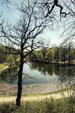 Lagoa em um parque Fotos de Stock