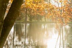 Lagoa enevoada tranquilo com as árvores coloridas do outono Imagens de Stock