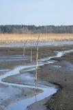 Lagoa enlameada Imagens de Stock Royalty Free