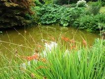 Lagoa estagnante cercada por plantas Imagem de Stock Royalty Free