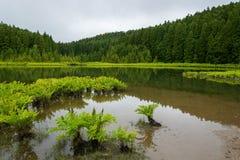 Lagoa fa la laguna color giallo canarino di Canári, con la riflessione, le piante verdi acquatiche e gli alberi immagine stock