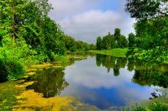 Lagoa, flores da lentilha-d'água foto de stock royalty free