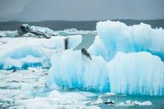 Lagoa Glacial de Jokulsarlon, Islândia Foto de Stock Royalty Free