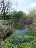 Lagoa imóvel Fotos de Stock Royalty Free