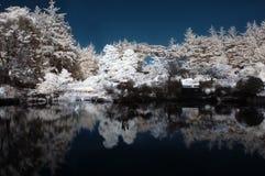 Lagoa infravermelha com árvores Imagens de Stock