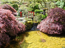 Lagoa japonesa Fotografia de Stock