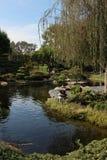 Lagoa japonesa do koi Fotografia de Stock Royalty Free