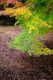 Lagoa Momiji de Kiyomizudera Fotos de Stock Royalty Free
