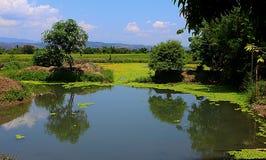 Lagoa na exploração agrícola Fotografia de Stock Royalty Free