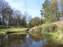 A lagoa na floresta Fotos de Stock Royalty Free