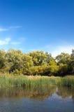 Lagoa na floresta com juncos Imagem de Stock Royalty Free