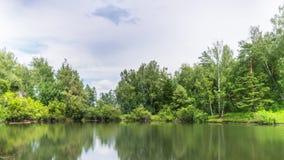 Lagoa na floresta do verão sob nuvens filme