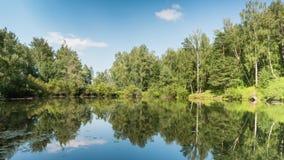 Lagoa na floresta do verão sob nuvens vídeos de arquivo