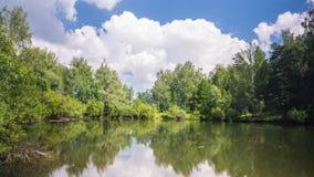 Lagoa na floresta do verão sob nuvens video estoque