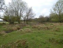 Lagoa na floresta em Inglaterra imagem de stock royalty free