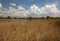 Lagoa na mola adiantada, junco seco Fotografia de Stock