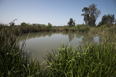 Lagoa na natureza Imagens de Stock