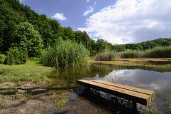 Lagoa nas madeiras Imagens de Stock Royalty Free