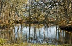 Lagoa nas madeiras na mola. fotos de stock