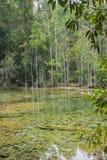 A lagoa natural é bonita imagens de stock royalty free