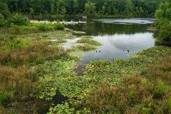 Lagoa no em Carolina Zoological Park norte fotos de stock
