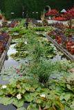 Lagoa no jardim Foto de Stock Royalty Free