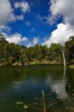 Lagoa no país Fotografia de Stock Royalty Free