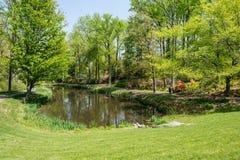 Lagoa no parque Foto de Stock
