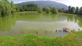 A lagoa no parque com tartarugas Banho de sol aquático da tartaruga em uma lagoa no parque filme