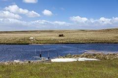 Lagoa norte Malvinas do leste island-2 Foto de Stock Royalty Free