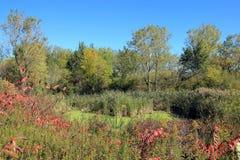 Lagoa Overgrown Fotografia de Stock Royalty Free