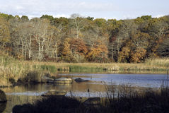 Lagoa pequena Fotografia de Stock