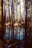 Lagoa pequena nas madeiras que refletem o céu azul, água, lagoa da fada do fairie Fotografia de Stock Royalty Free