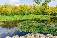 Lagoa pitoresca no parque Tivoli da cidade Fotografia de Stock Royalty Free