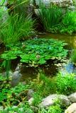 Lagoa que landsaping Imagens de Stock Royalty Free