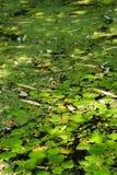 Lagoa quieta Foto de Stock Royalty Free