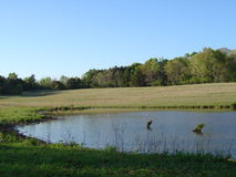 Lagoa quieta no pasto rural da vaca de Mississippi Fotos de Stock Royalty Free