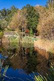 Lagoa refletindo na queda Imagem de Stock