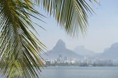 Lagoa Rio de Janeiro Brazil Scenic Skyline Palm Tree. Tropical skyline view of Lagoa lagoon in Rio de Janeiro Brazil with Ipanema and Leblon on the horizon Royalty Free Stock Photos