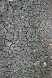 Lagoa seca Imagens de Stock