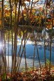 Lagoa selecionada bambu Fotos de Stock