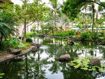 Lagoa tropical do lírio foto de stock royalty free