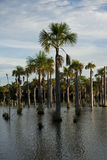 Lagoa tropical em Brasil Fotografia de Stock