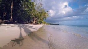 Lagoa tropical, praia arenosa da ilha e vídeo do zangão do voo Punta Cana video estoque