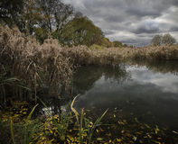 Lagoa velha Imagens de Stock Royalty Free