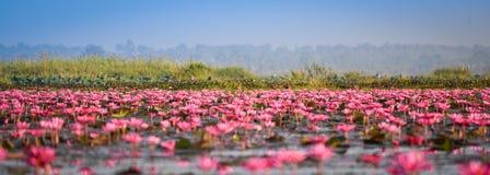 Lagoa vermelha de Udon Thani Lotus Lake Color do marco Imagem de Stock